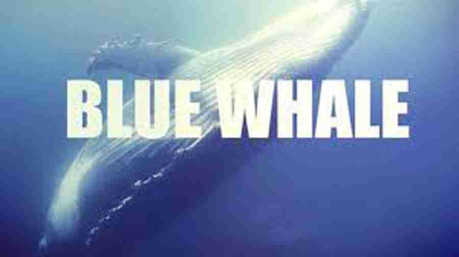 Blue Whale e adolescenza – Psicologo Livorno